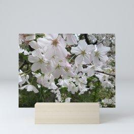 Spring - Sacura Blossom Mini Art Print
