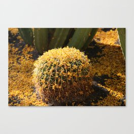 Barrel Cactus Covered In Butter Yellow Palo Brea Blossoms in Landscape Canvas Print