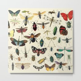 Lovely Butterfly Metal Print