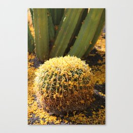 Barrel Cactus Covered In Butter Yellow Palo Brea Blossoms in Portrait Canvas Print