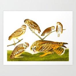 Burrowing Owl Illustration Art Print
