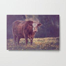 Brown Cow in Wild Flower Field Metal Print