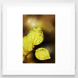 yellow leaves. Framed Art Print