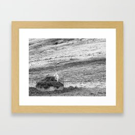 Lamb Framed Art Print