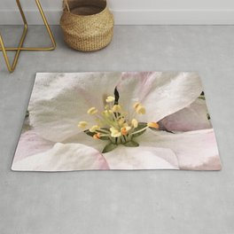A Small Beautiful Blessing Rug