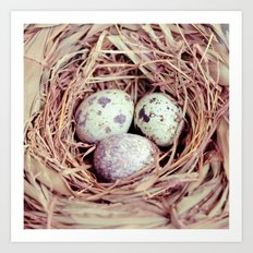 Birds Nest Eggs Art Print