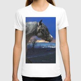 Welsh Pony Stallion T-shirt