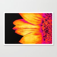 sunflower Canvas Prints featuring Sunflower Pink Yellow by PureVintageLove