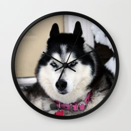 Haley Husky Wall Clock