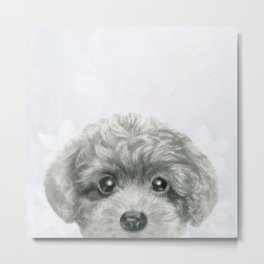 Toy poodle Grey with Background by miart Metal Print