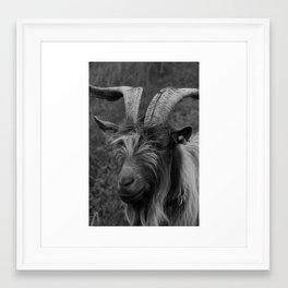 Billy-Goat no.2 Framed Art Print
