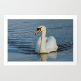 Elegant Mute Swan in the Harbor Art Print
