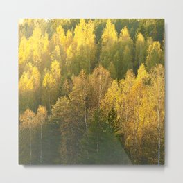 Forest In Sunset Tones  Metal Print