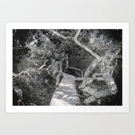 A Walk Through the Crooked Trees Art Print