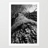 Retired Tree Art Print