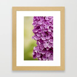 Beautiful Lilac Framed Art Print