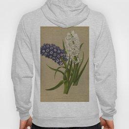 Arendsen, Arentine H. (1836-1915) - Haarlem's Flora 1872 - Hyacinths 1 Hoody