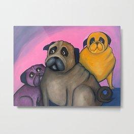 three pugs Metal Print