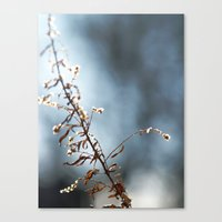 celebrity Canvas Prints featuring local celebrity by Monica Ortel ❖