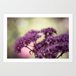 Spirea Blush Art Print