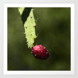 Elegant Hanging Cactus Fruit Art Print