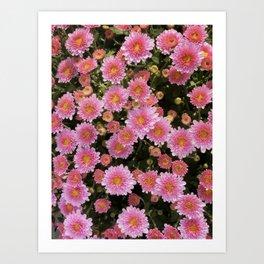 Bellis Perennis, Beautiful Pink Daisy Art Print
