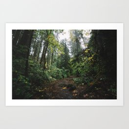 Rainy Forest Art Print