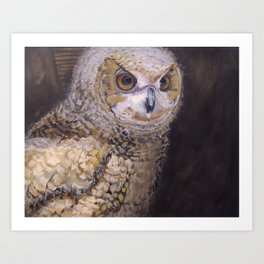 Portrait of an Owl Chick Art Print