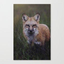 Vulpes Canvas Print
