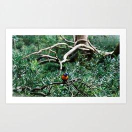Parrot. Art Print