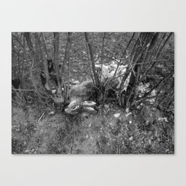 Dead Rabbit Dead. Canvas Print