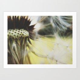 Dandelion: Seeds Horizontal Art Print