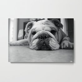 Black and White English Bulldog Photography Metal Print