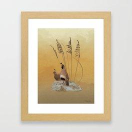 California Valley Quail Framed Art Print