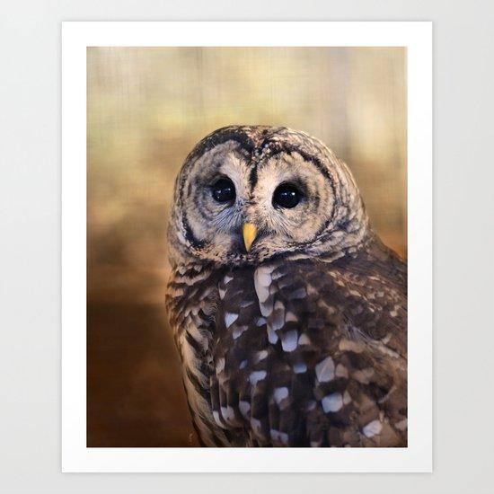The Wise Owl Art Print