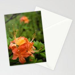 Flame Azalea Botanical Fine Art Print, Flower Print, Wildflower Nature Print Stationery Cards
