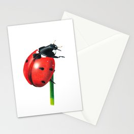 Ladybug   Colored pencil drawing Stationery Cards