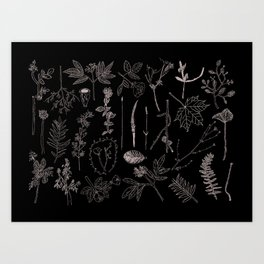 Nature Botanical Drawings by young kid artists, profits are donated to The Ivy Montessori School Art Print
