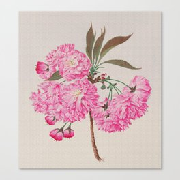 Barrier Mountain Cherry Blossoms Watercolor Canvas Print