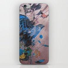 Buteo Regalis iPhone & iPod Skin