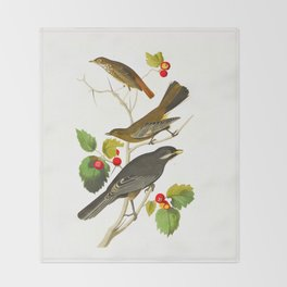 Little Tawny Thrush, Ptiliogony's Townsendi, Canada Jay Throw Blanket