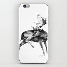Fallow Deer Stag iPhone & iPod Skin