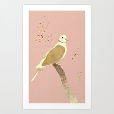 Streptopelia decaocto Art Print