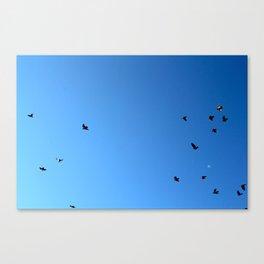 Bird Plane FOUR Canvas Print
