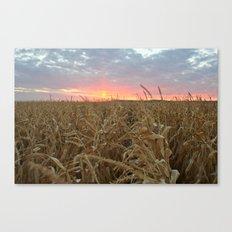 Corn Maze Sunset Canvas Print
