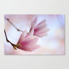 Magnolia flower macro 284 Canvas Print