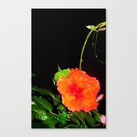hibiscus Canvas Prints featuring Hibiscus by Iris V.