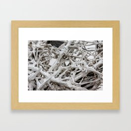 Bleached Roots of Driftwood Framed Art Print