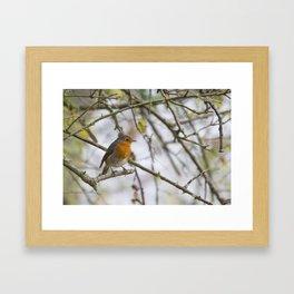 Robin in Thorns Framed Art Print