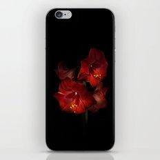 Scarlet Amaryllis iPhone & iPod Skin